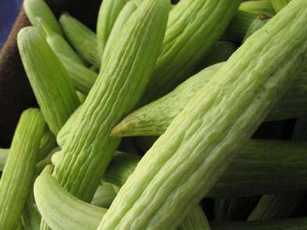 armenian-cucumber.jpg