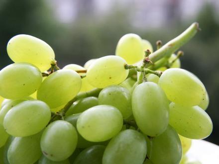 grape-white.jpg